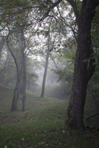 Misty forest morning